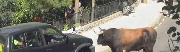 [VIDEO] Osveta pobesnelog bika: Podigao je automobil natprirodnom snagom i bušio ga dok nije počeo da curi