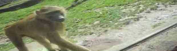 Kada vam neko dosađuje i ne želi prestati, onda ovaj majmun ima najbolju poruku za njih (VIDEO)