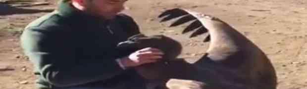 Ova ogromna ptica je sletjela na pod kako bi se zahvalila čovjeku. Razlog će vas ostaviti bez daha (VIDEO)