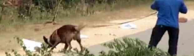 Policijski pas pronašao minu, a onda mu je eksplodirala direktno u lice. Dobro se pripremite za ono što će uslijediti na 0:18!