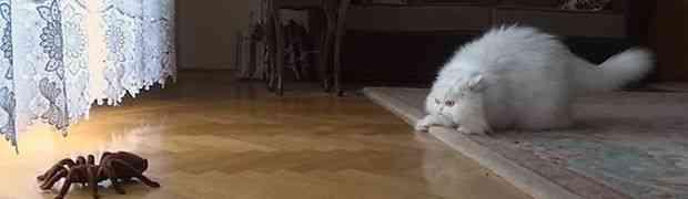 Reakcija mačke na pauka je oduševila ceo svet! Pogledajte zašto!