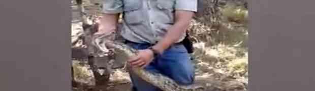 Profesionalni lovac na zmije igrao se sa ogromnim pitonom, a onda su stvari KRENULE PO ZLU... (VIDEO)