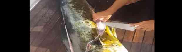Ulovio je ogromnu ribu, a onda uzeo nož i počeo je rezati na brodu. Kada joj je rasporio utrobu ZANIJEMIO JE! (VIDEO)
