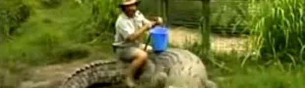 Uzeo je plavu kantu u ruke, a onda sjeo na leđa ogromnog krokodila. Dobro obratite pažnju šta će se dogoditi na 0:17! (VIDEO)