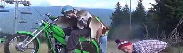 LUDO, DA LUĐE NE MOŽE! Pogledajte kako ovaj tip reže drva uz pomoć motora. Ovako nešto nikada niste vidjeli! (VIDEO)