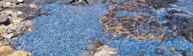 Šetajući obalom mislio je da je naišao na hiljade plastičnih flaša koje je more izbacilo na površinu. Kada se približio i bolje pogledao - ŠOK!