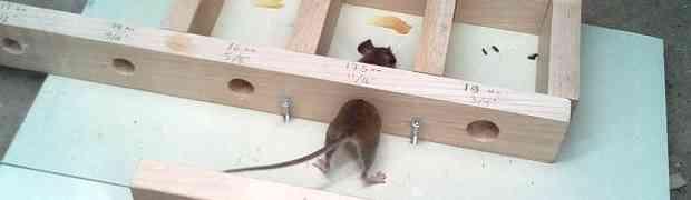 Zanima vas kroz koliko se malu rupu može provući miš? Ovaj video ćete gledati u JEDNOM DAHU! (VIDEO)