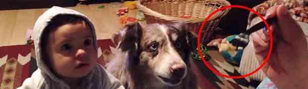 Htjela je da nahrani svoje malo dijete, ali ono što je uradio njen pas nasmijalo je MILIONE (VIDEO)