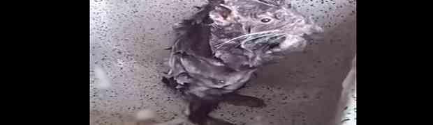A MISLILI SMO DA SMO SVE VIDJELI: Ovaj pacov voli da se tušira poput odraslog čovjeka! (VIDEO)