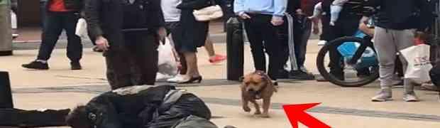 Dvojica pijanaca potukla se nasred trga na zaprepaštenje svih prolaznika, a onda im je prišao jedan pas i uradio OVO! (VIDEO)