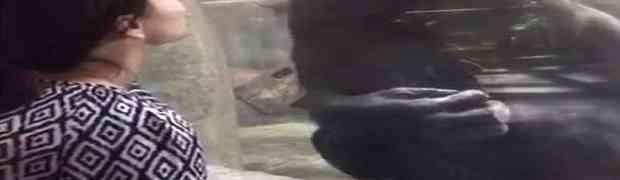 Stala je ispred majmuna u zoološkom vrtu, i 'dala' mu poljubac. Ovakvu njegovu reakciju NIJE OČEKIVALA! (VIDEO)