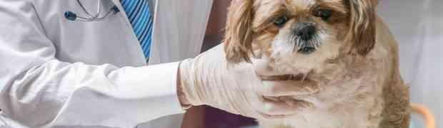 Doveo je svog psa veterinaru, ali ono što je jadna životinja uradila NASMIJALO JE CIJELI INTERNET (VIDEO)