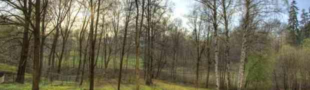 Otišao je u šumu i cijelu godinu dana fotografisao isto mjesto... Ovo ćete gledati u JEDNOM DAHU (VIDEO)