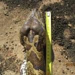 zmija (8)