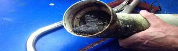 Ovaj čovjek je primjeto nešto zaglavljeno u svojoj odvodnoj cijevi. Kada je skinuo i bolje pogledao... ŠOK!