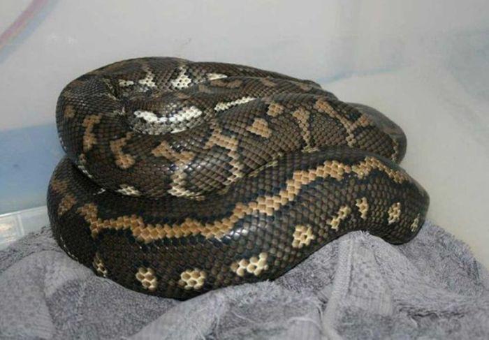 zmija-u-cijevi (5)