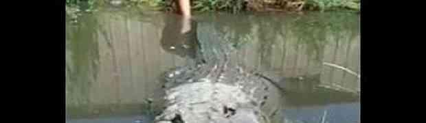 Povukao je ogromog krokodila za rep i ubrzo shvatio da to NIJE BILA PAMETNA IDEJA! (VIDEO)
