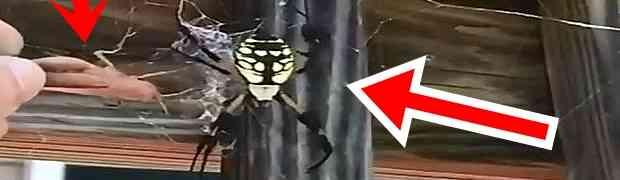 Odlučio je da približi skakavca ogromnom pauku... Ono što će uslijediti ostaviće vas u šoku! (VIDEO)