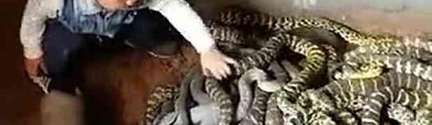 Pustili su dijete koje je tek prohodalo u ogromno leglo zmija! (VIDEO)