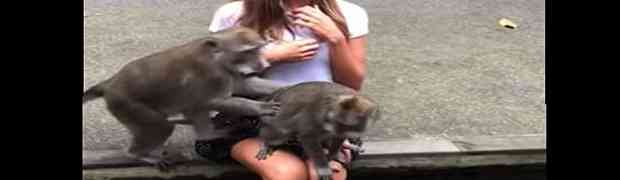 Htjela je da se slika s majmunima u šumi... OVO NIJE OČEKIVALA! (VIDEO)