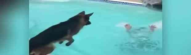 Djevojka se počela 'utapati' u bazenu, a onda je pas uradio NAJLUĐU STVAR (VIDEO)
