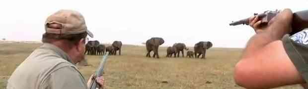 Lovci su pucali na krdo slonova i ubili jednog od njih. UBRZO SU ZAŽALILI! (VIDEO)